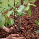 Vodafone and Grow-Trees to plant 3 lakh trees