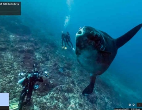 No diving skills required! Google Street View now takes you underwater right from the comfort of your home