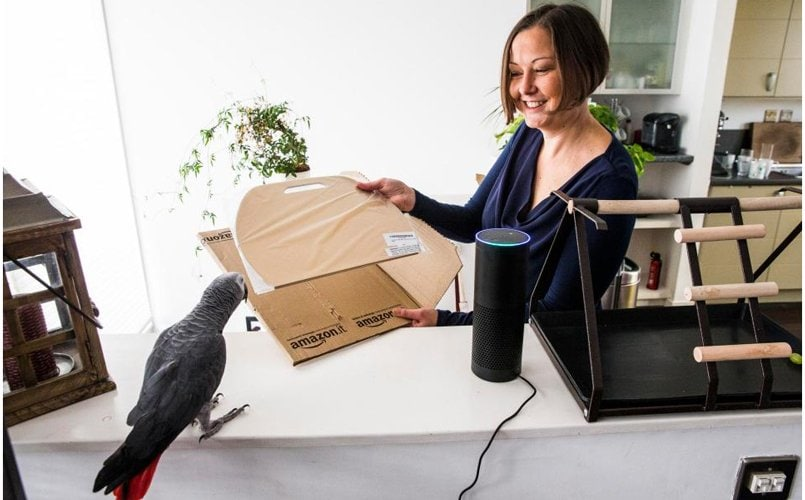 Bored parrot shops gift boxes using Amazon Echo in owner's absence