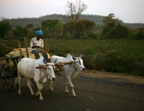 Microsoft AI helping Indian farmers increase crop yields