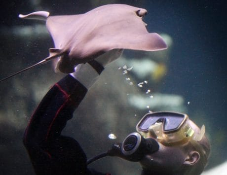 Stingray soft robot may promote bio-inspired robotics