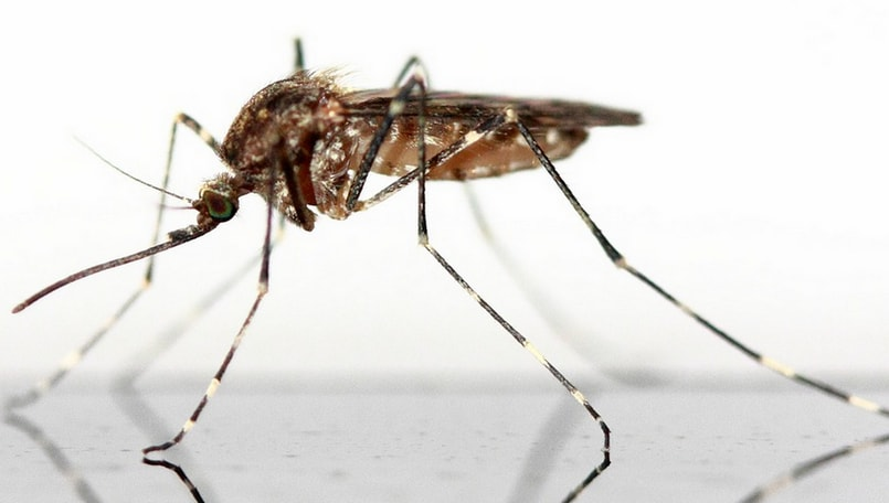 Google's parent Alphabet Inc. working towards eradicating mosquitoes: Report