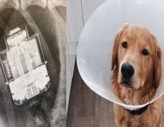 AirPods worked fine after being removed from dog's stomach via surgery